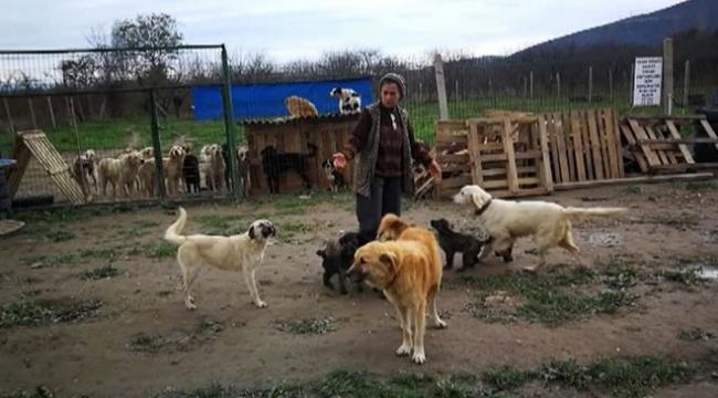 Kurdukları merkezde hasta hayvanları iyileştiriyorlar