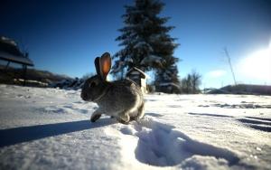 Bolu Dağında kar güzelliği