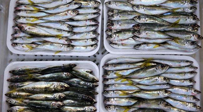 Türkiyeden 64 ülkeye balık ihracatı