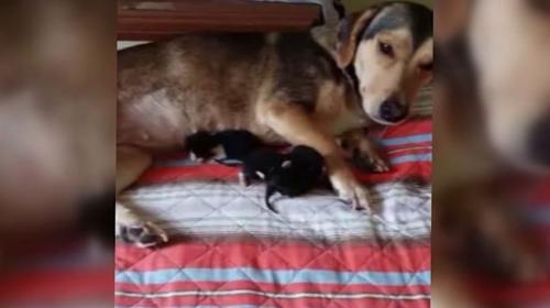 """Bursada """"Sosis"""" isimli köpek kedi yavrularına sahip çıkıyor"""
