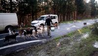 Köpeklerin yolunu gözlediği topluluk: Huysuz İhtiyar