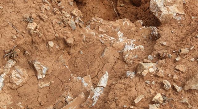 Denizlide 9 milyon yıllık 14 hayvan fosili bulundu