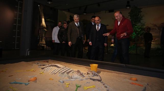 Kayseride 7,5 milyon yıllık fosiller sergilenmeye hazırlanıyor