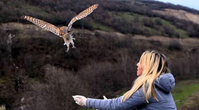 Yaralı bulunan baykuşlar tedavi edilerek doğaya bırakıldı