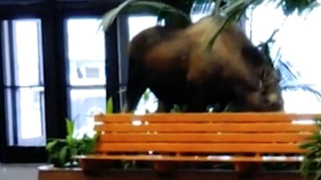 ABD'de hastaneye giren geyik saksıdaki bitkileri yedi