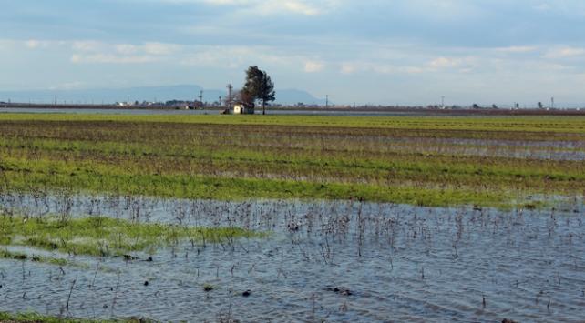 Hataydaki yağışlar tarım alanlarına zarar verdi