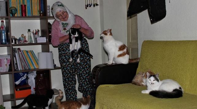 Nuriye Teyze üşümesinler diye 58 kediye evinde bakıyor