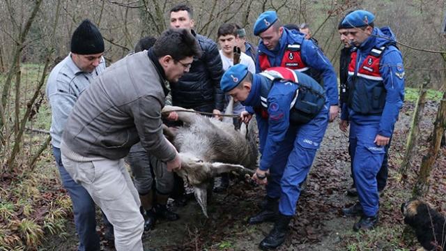 Yaralı geyik donmak üzereyken kurtarıldı