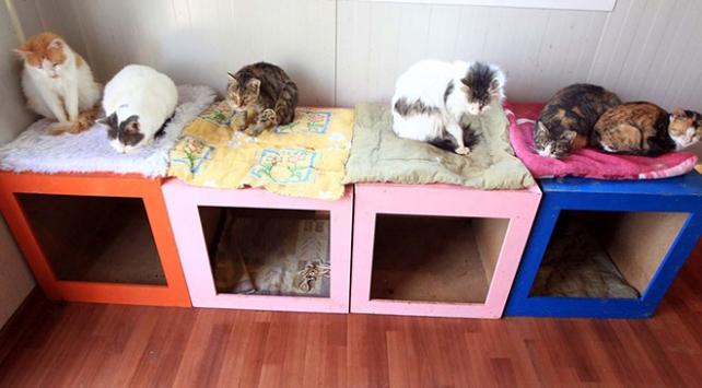 """Samsunda bin kedinin yaşadığı """"Kedi Kasabası"""""""