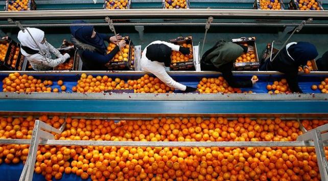 Rusya'ya en çok meyve sebze ihraç edildi